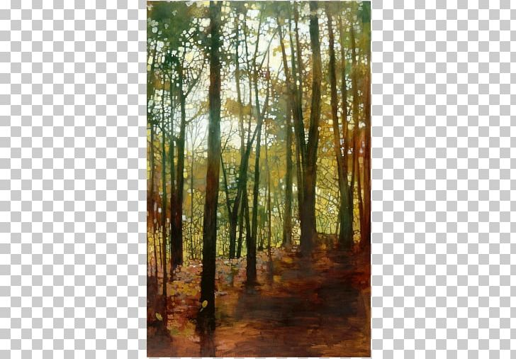 Northern Hardwood Forest Temperate Broadleaf And Mixed Forest Woodland Bayou PNG, Clipart, Autumn, Biome, Broadleaved Tree, Conifers, Deciduous Free PNG Download