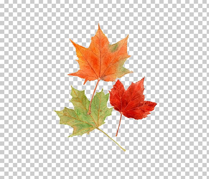 Autumn Leaves Maple Leaf Autumn Leaf Color Watercolor Painting PNG, Clipart, Autumn, Autumn Leaf, Autumn Leaf Color, Autumn Leaves, Color Free PNG Download