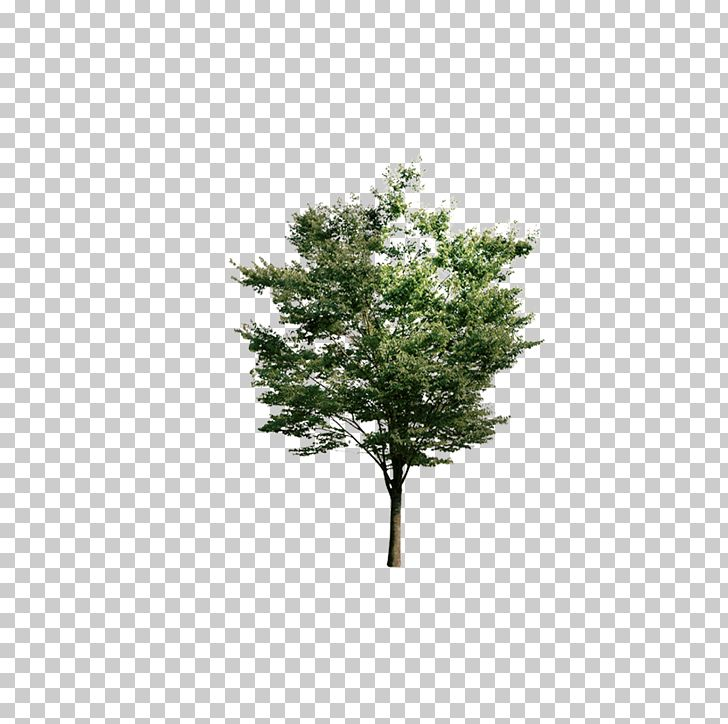 Tree Euclidean Resource PNG, Clipart, Arbor, Branch, Camphor, Camphor Tree, Christmas Tree Free PNG Download