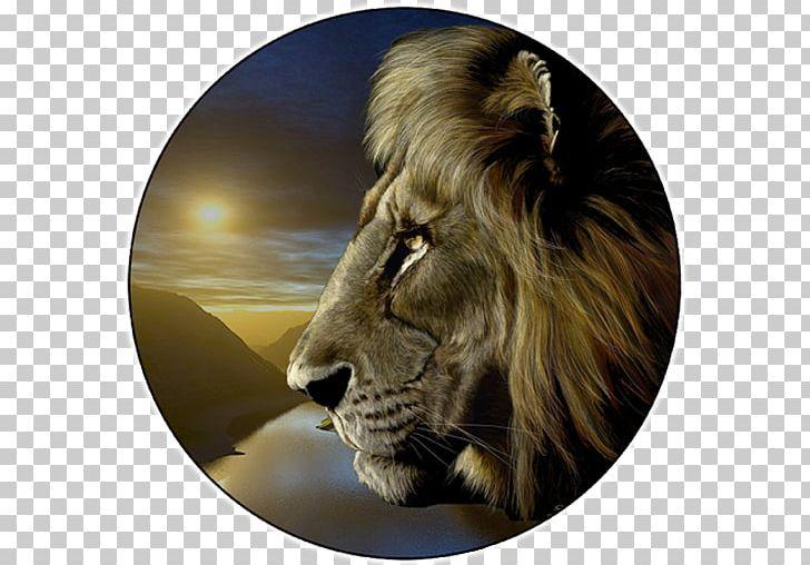 Lionhead Rabbit Tiger Roar Cougar PNG, Clipart, Alsancak, Animal, Animals, Art, Big Cats Free PNG Download