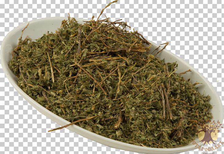 Prostrate Knotweed Redshank Herb Raw Material Tea PNG, Clipart, Berdsk, Biluochun, Chai, Disease, Herb Free PNG Download