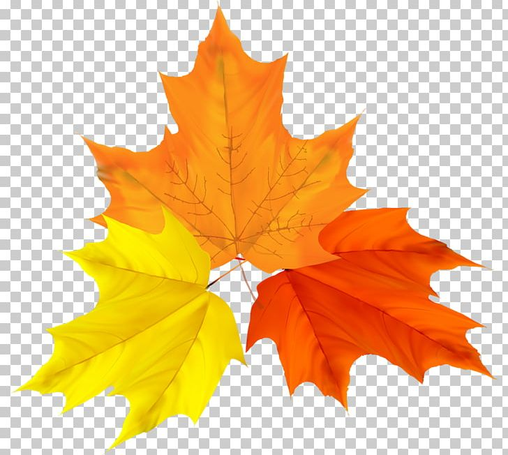 Autumn Leaf Color Autumn Leaf Color Graphics PNG, Clipart, Autumn, Autumn Leaf Color, Autumn Leaves, Computer, Computer Icons Free PNG Download