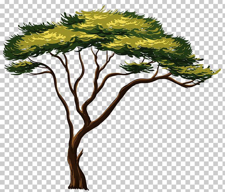 Africa Tree PNG, Clipart, Africa, African Trees, Baobab
