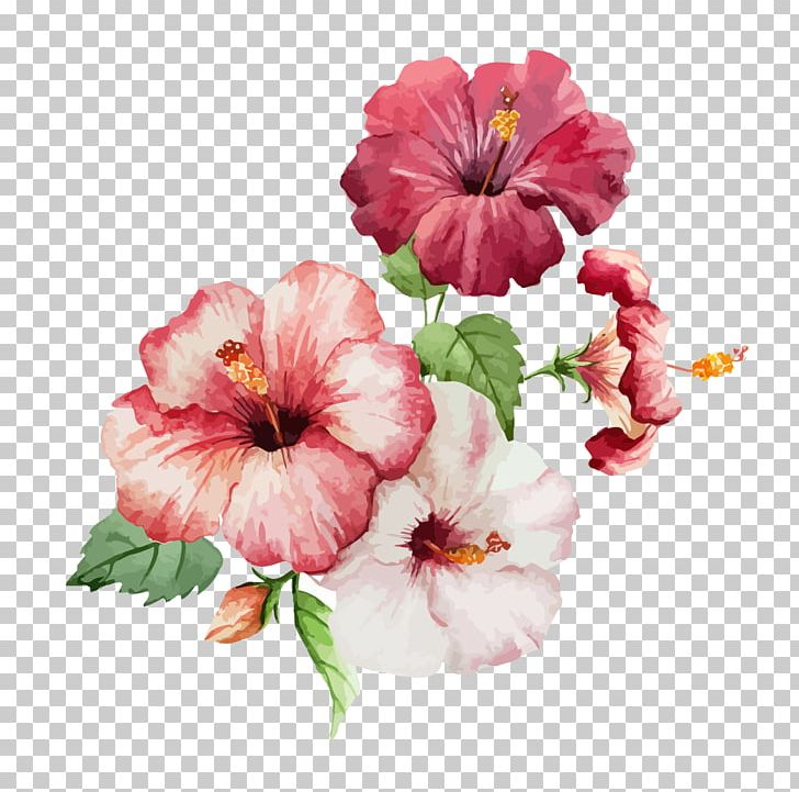 Hibiscus Flower Drawing Watercolor Painting PNG, Clipart