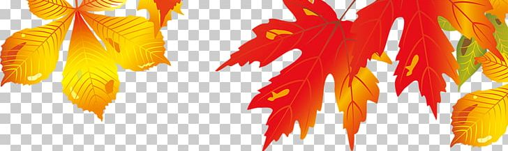 Maple Leaf Autumn PNG, Clipart, Autumn, Autumn Leaves, Beautiful, Beautiful Maple Leaves Falling, Beauty Free PNG Download