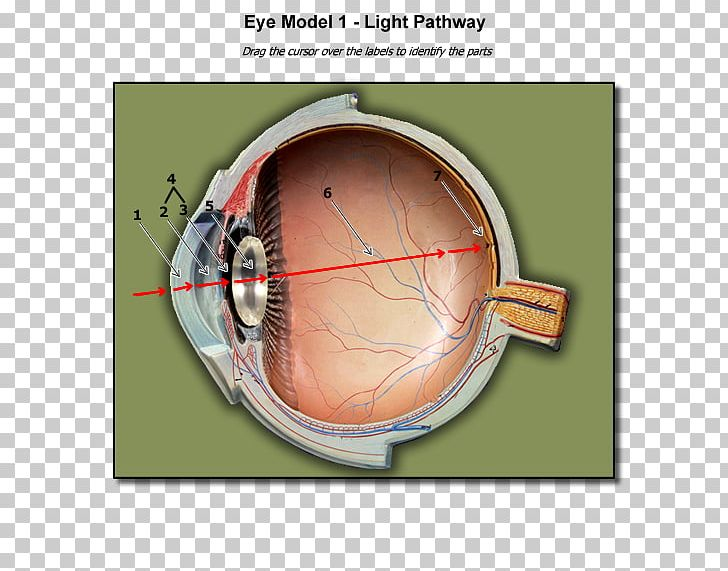 light human eye anatomy blind spot png, clipart, anatomy, biology, blind  spot, eye, fovea centralis free