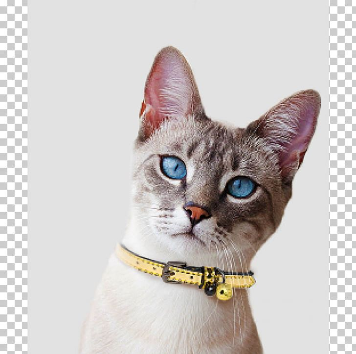 Devon Rex American Wirehair German Rex Domestic Short-haired Cat Whiskers PNG, Clipart, American Wirehair, Animals, Asian, Black Cat, Carnivoran Free PNG Download