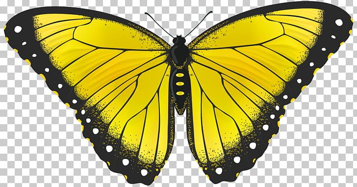 Butterfly yellow. Png clipart animal arthropod