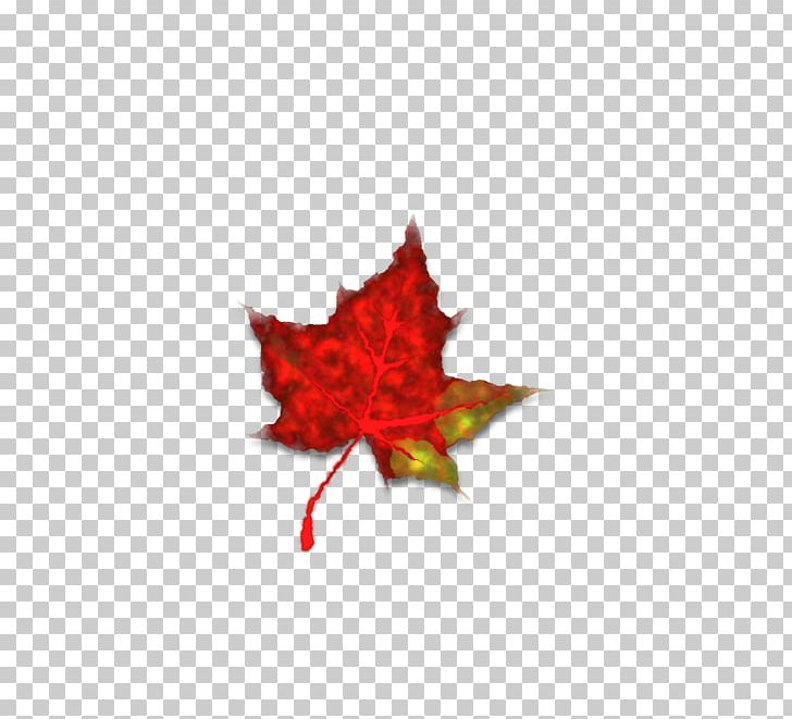 Maple Leaf Japanese Maple Autumn Leaf Color Red Maple PNG, Clipart, Autumn, Autumn Leaf Color, Computer Icons, Fall, Flowering Plant Free PNG Download