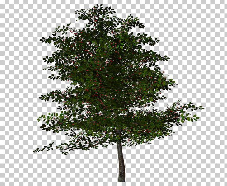 Tree Oak PNG, Clipart, 3d Computer Graphics, Branch, Cinar Mahallesi Muhtarligi, Computer Icons, Desktop Wallpaper Free PNG Download