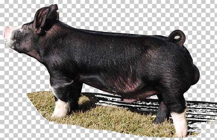 Berkshire Pig Hampshire Pig Duroc Pig Dog Breed Png Clipart