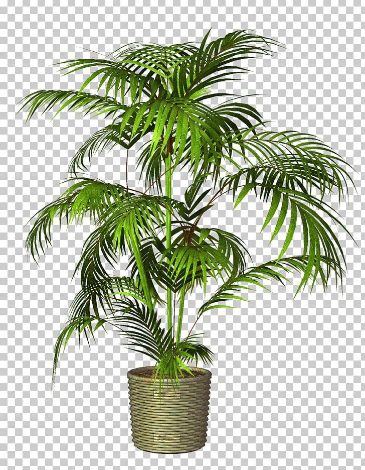 Flowerpot Houseplant PNG, Clipart, Arecaceae, Arecales, Bonsai, Bract, Coconut Free PNG Download