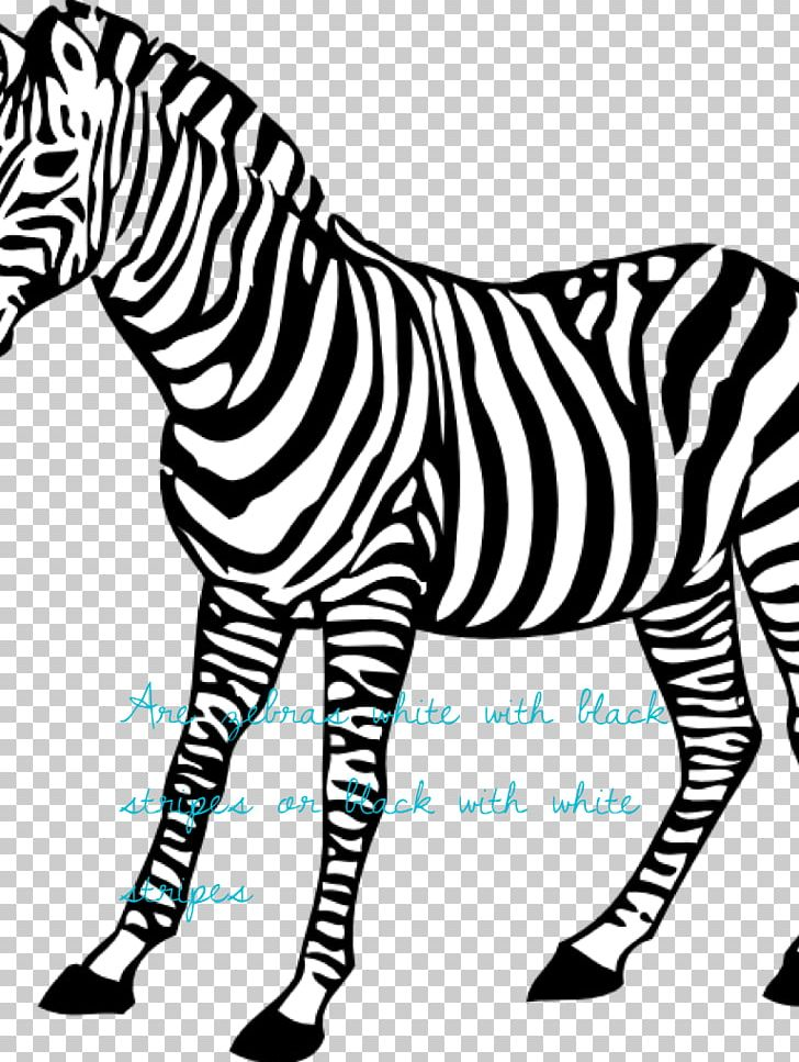 Baby Zebra Coloring Book Animal PNG, Clipart, Adult, Animal ...