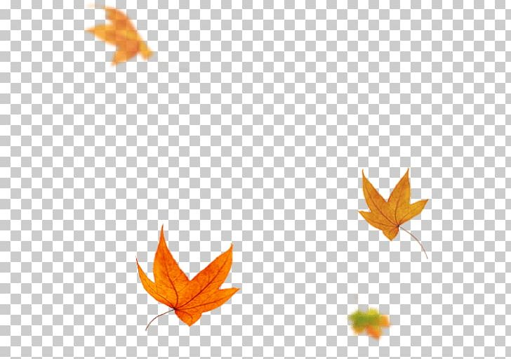 Maple Leaf PNG, Clipart, Flower, Leaf, Maple, Maple Leaf, Orange Free PNG Download