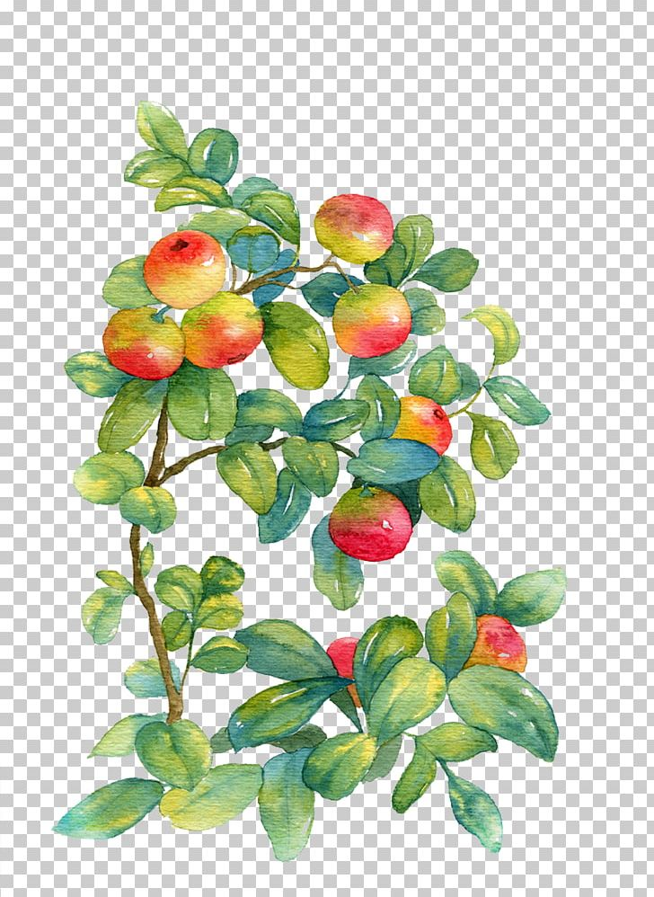 Watercolor Painting Watercolor: Flowers PNG, Clipart, Apple, Apple Fruit, Apple Logo, Apple Tree, Art Free PNG Download