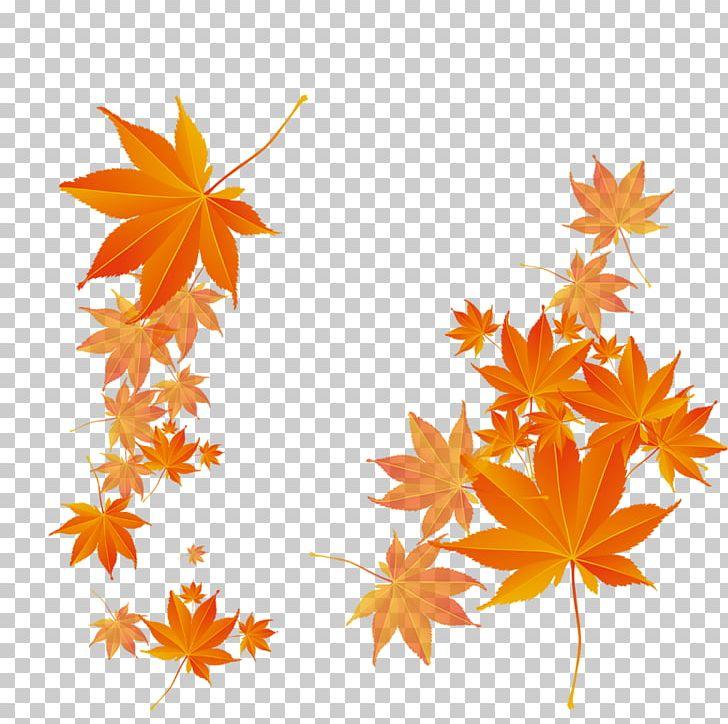 Maple Leaf Autumn PNG, Clipart, Akiba, Autumn, Autumn Leaf Color, Autumn Tree, Creative Free PNG Download