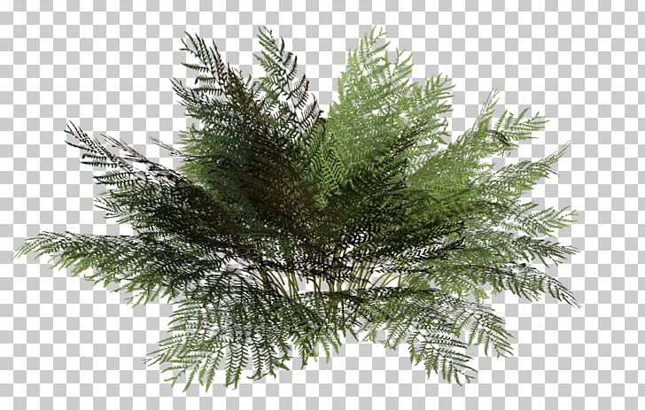 Tree Rendering Plant Shrub PNG, Clipart, Alpha Compositing