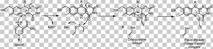 Flavin Group Flavin Adenine Dinucleotide Glutathione Reductase Flavin Reductase Redox PNG, Clipart, Angle, Black And White, Calligraphy, Chemical Reaction, Chemistry Free PNG Download