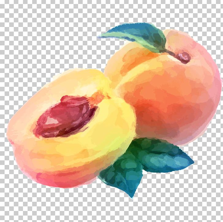 Watercolor Painting Peach Fruit Drawing PNG, Clipart, Acr, Food, Fruit Nut, Graphic Arts, Happy Birthday Vector Images Free PNG Download