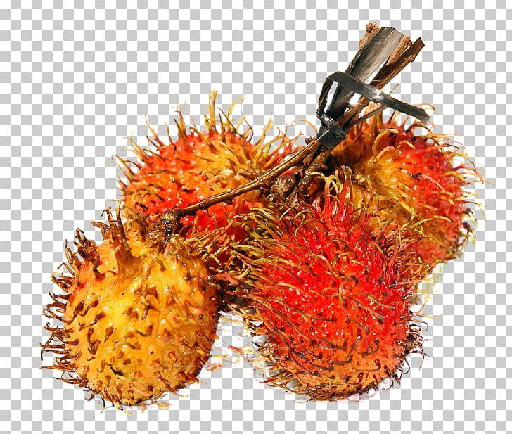 Rambutan Fruit PNG, Clipart, Auglis, Computer Icons