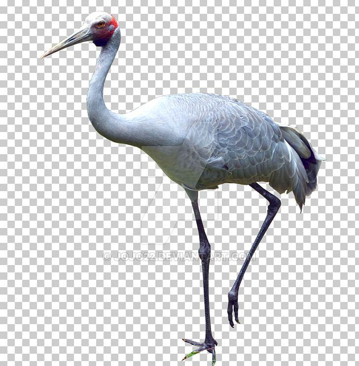 Fauna Water Bird Neck Beak PNG, Clipart, Beak, Bird, Crane, Crane Like Bird, Fauna Free PNG Download