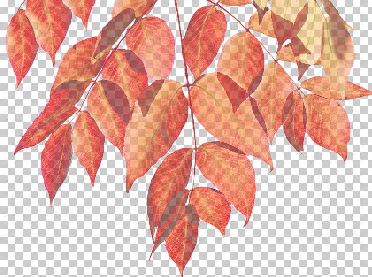 Autumn Leaf Color Autumn Leaf Color Infographic PNG, Clipart, Autumn, Autumn Leaf Color, Branch, Color, Download Free PNG Download