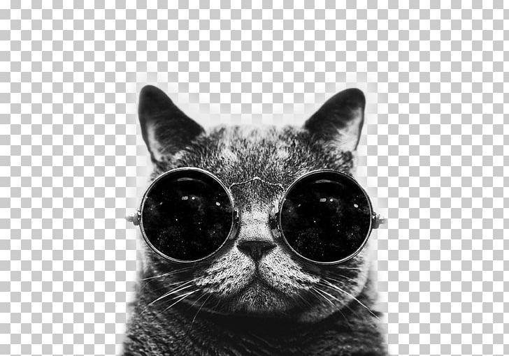 Cat Desktop Kitten Drawing Png Clipart Animals Black And White Cat Cat Like Mammal Desktop Wallpaper