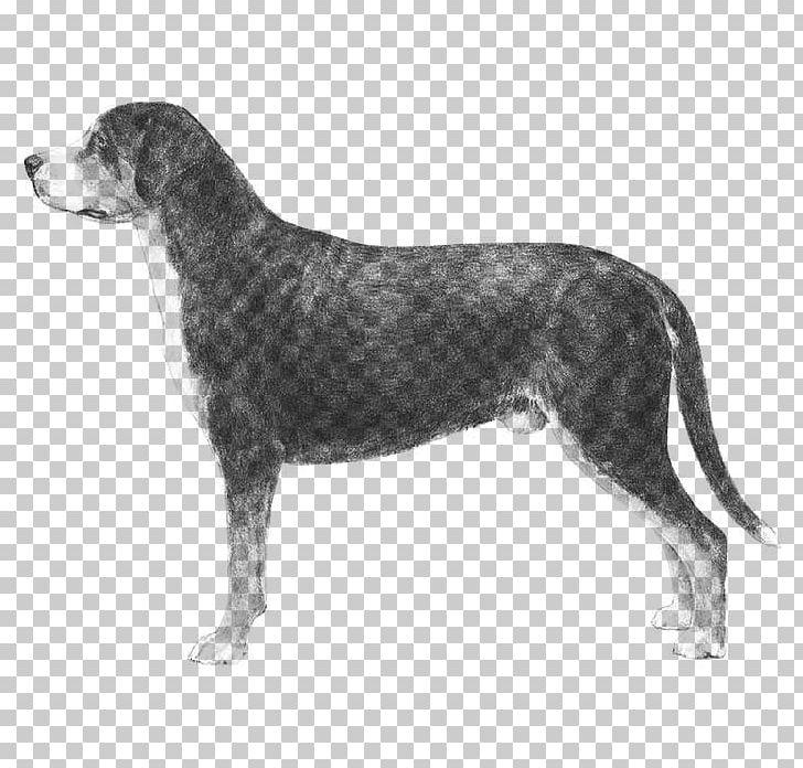 Greater Swiss Mountain Dog Bernese Mountain Dog Dog Breed