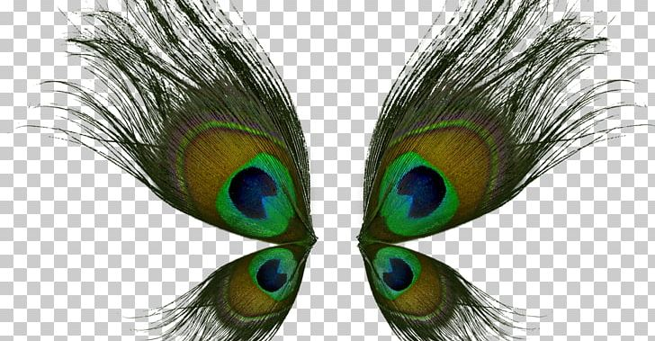 Bird Asiatic Peafowl Feather PNG, Clipart, Animals, Asiatic Peafowl, Beak, Bird, Closeup Free PNG Download
