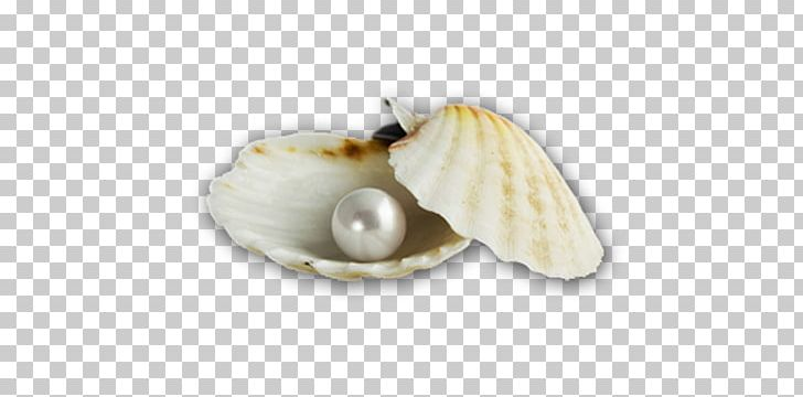 Oyster With Pearl Clip Art at Clker.com - vector clip art online, royalty  free & public domain