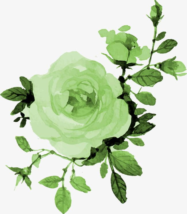 Watercolor flowers green. Png clipart backgrounds botany