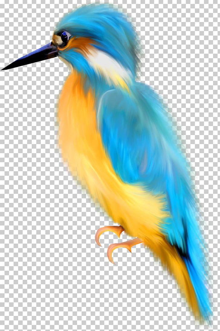 Bird Watercolor Painting Drawing PNG, Clipart, Animals, Beak, Bird, Bluebird, Document Free PNG Download