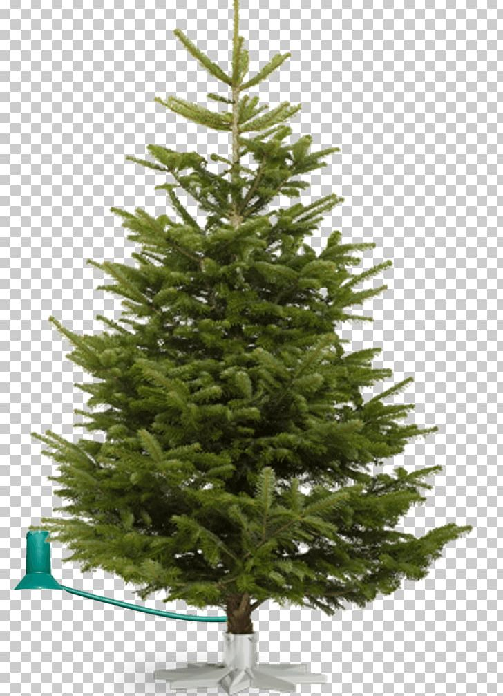Noble Fir Christmas Tree.Nordmann Fir Fraser Fir Noble Fir Christmas Tree Png