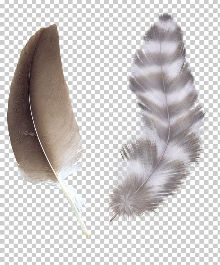 Bird Feather Color Asiatic Peafowl PNG, Clipart, Animals, Asiatic, Asiatic Peafowl, Bird, Brown Free PNG Download