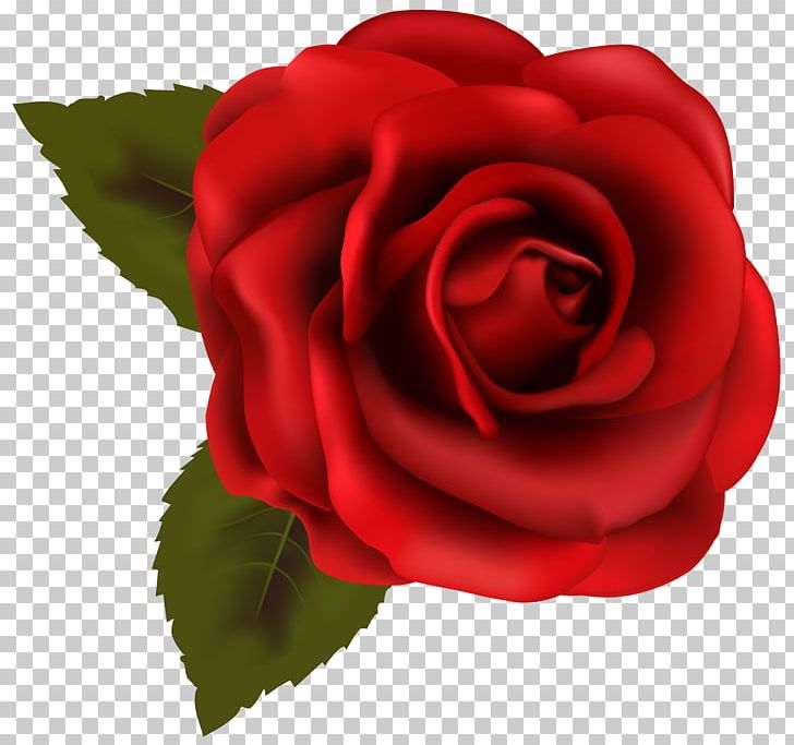 Rose Red PNG, Clipart, Beautiful, Blue, Blue Rose, China Rose, Clipart Free PNG Download