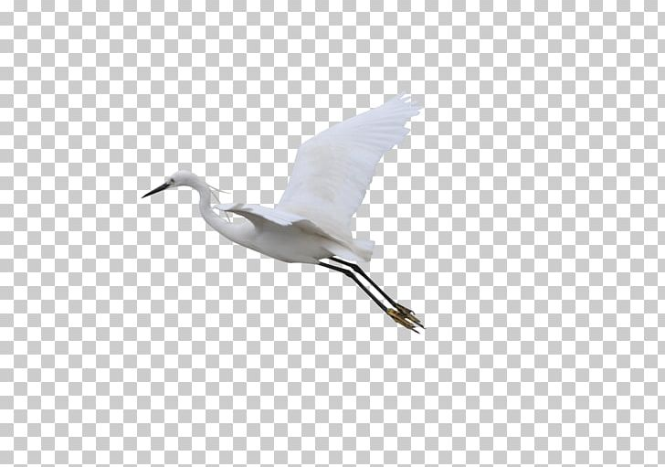 Crane Flight Bird PNG, Clipart, Adobe Illustrator, Beak, Bird, Crane