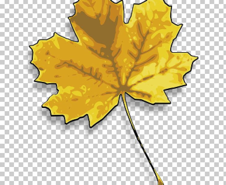 Maple Leaf Autumn Leaf Color Japanese Maple PNG, Clipart, Autumn, Autumn Leaf Color, Chlorophyll, Color, Drawing Free PNG Download