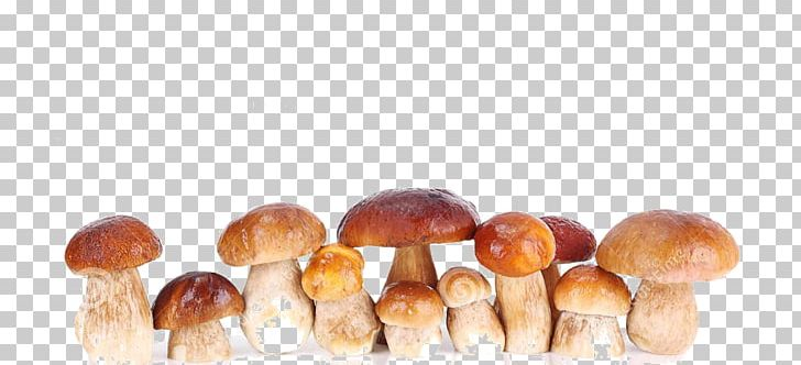 Edible Mushroom PNG, Clipart, And One, Edible, Edible Mushroom, Ingredient, Mushroom Free PNG Download