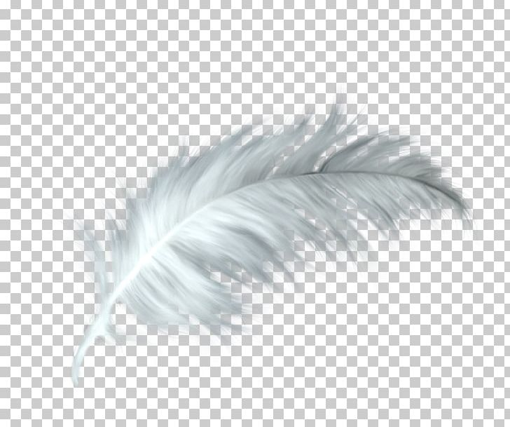White Feather Healing Quill Paris PNG, Clipart, Animal, Animals, Black And White, Child, Feather Free PNG Download