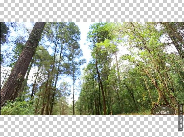 Temperate Coniferous Forest Temperate Broadleaf And Mixed Forest Tropical And Subtropical Moist Broadleaf Forests Valdivian Temperate Rain Forest PNG, Clipart, Biome, Deciduous, Forest, Grove, Jungle Free PNG Download