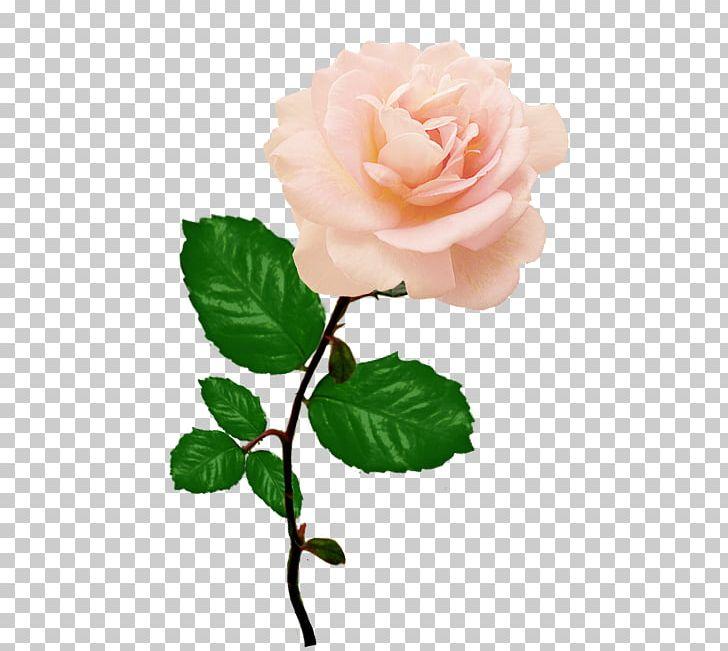 Rose Flower Red Pink PNG, Clipart, Branch, Bud, China Rose, Cut Flowers, Desktop Wallpaper Free PNG Download