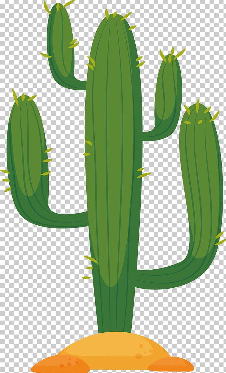 Cactus desert. Cactaceae in the euclidean