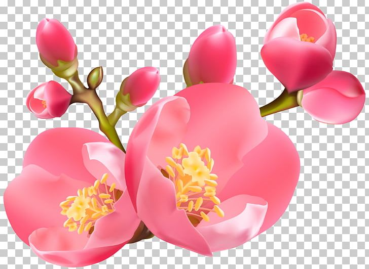 The Springs PNG, Clipart, Blossom, Camellia, Cherry Blossom, Clip Art, Clipart Free PNG Download