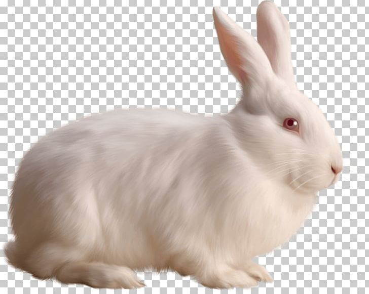 Rabbit PNG, Clipart, Animal, Animallover, Animals, Computer Icons, Cottontail Rabbit Free PNG Download