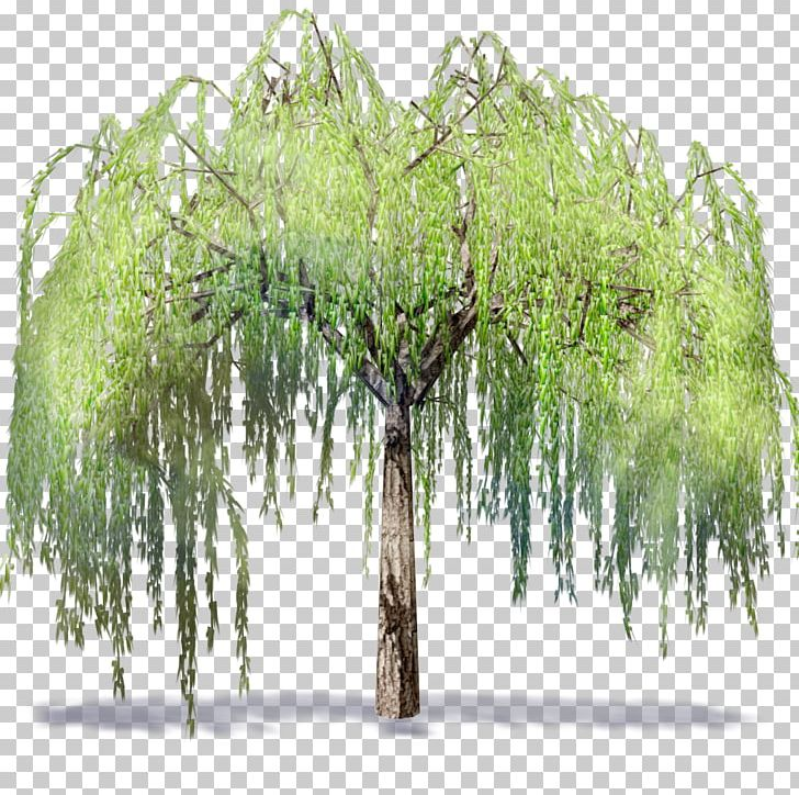 Willow Autodesk Revit  dwg Building Information Modeling Tree PNG