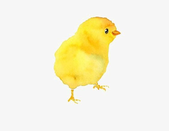 Chicken watercolor. Chick png clipart aberdeen
