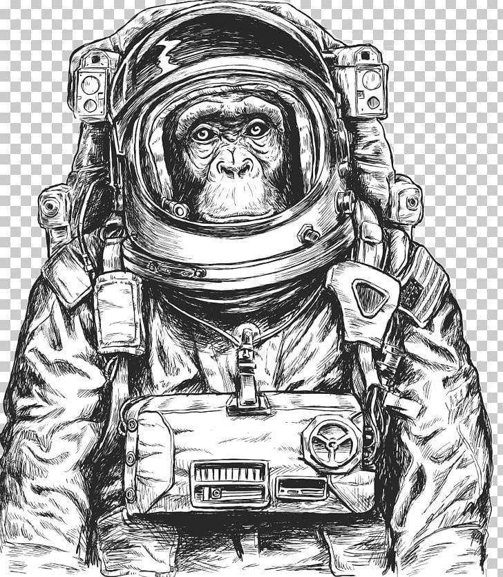 Chimpanzee Monkeys And Apes In Space PNG, Clipart, 9 Th, Animals