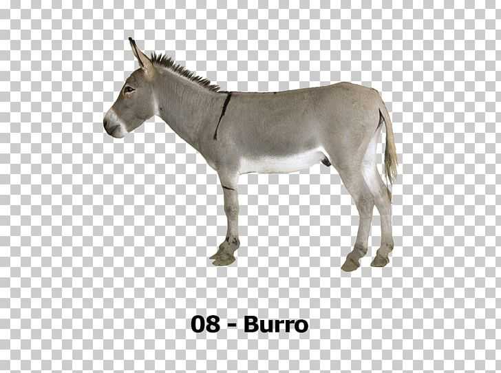 T-shirt Mule Donkey Horse Animal Sound For Kids PNG, Clipart