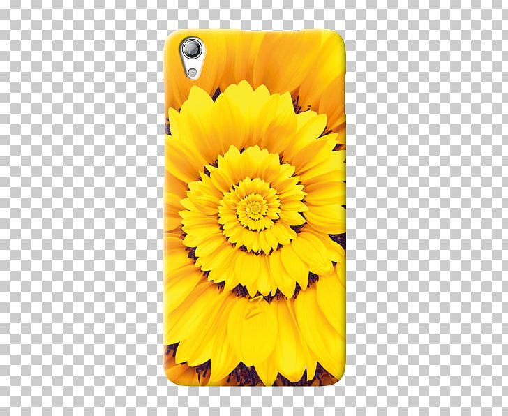 Transvaal Daisy Sunflower M Mobile Phone Accessories Marigolds Mobile Phones PNG, Clipart, Calendula, Daisy Family, Flower, Flowering Plant, Gerbera Free PNG Download
