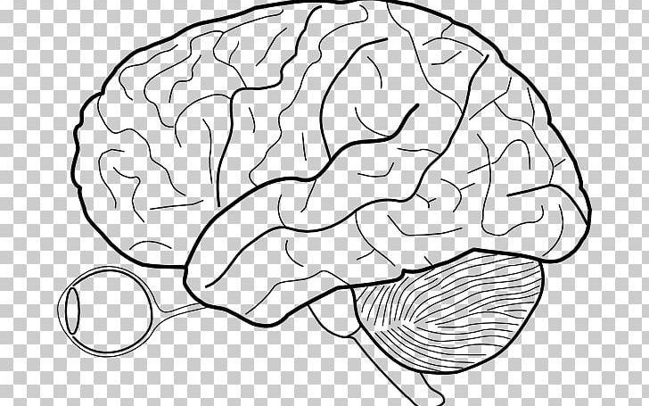 Outline Of The Human Brain Human Body PNG, Clipart, Anatomy, Area, Black And White, Blank Eye Diagram, Brain Free PNG Download